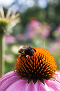 Rebel t1i bees and bridge_29