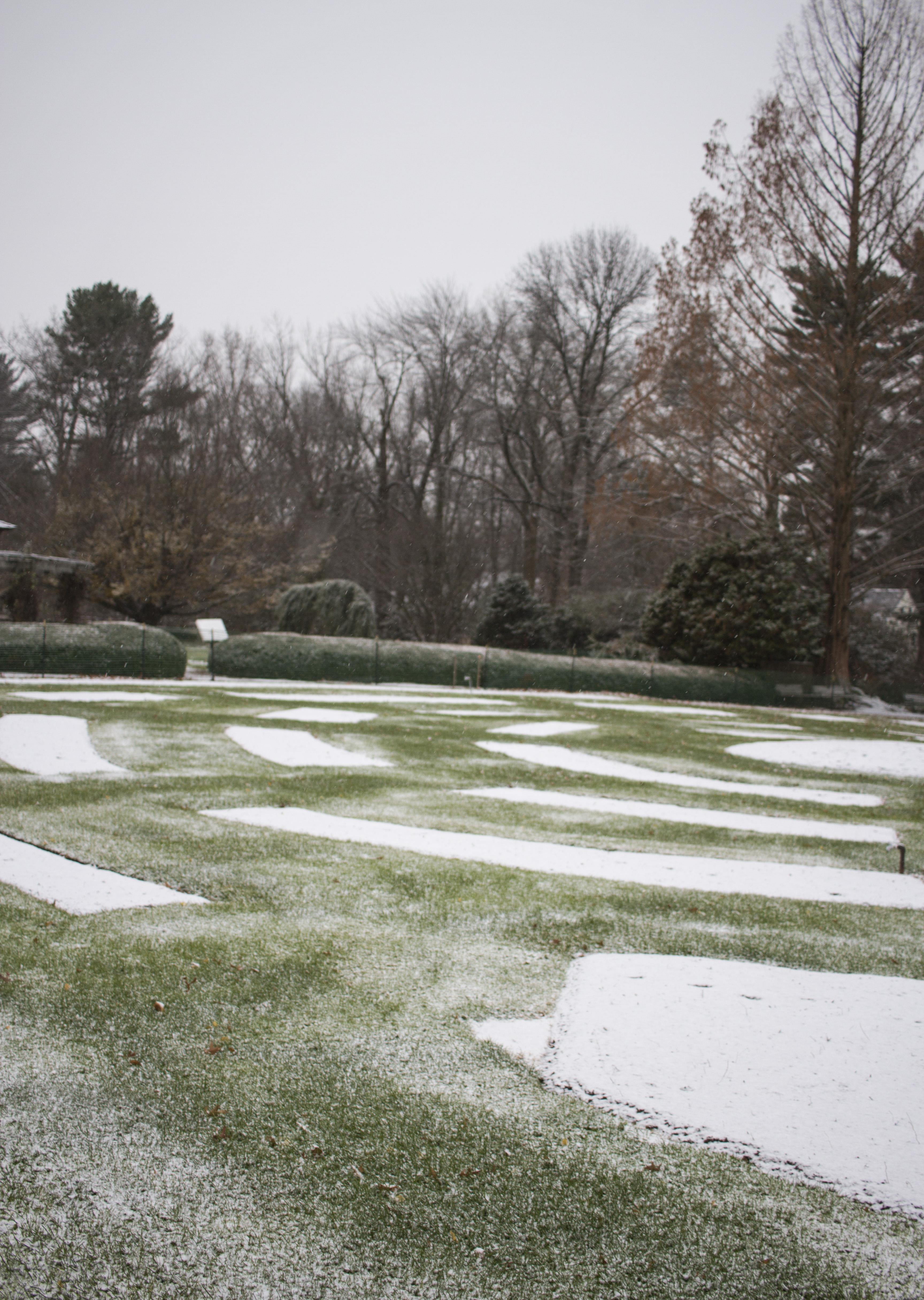 Snowy Elizabeth Park_018