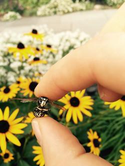 Yellow Held Bee