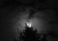 baw tree moon