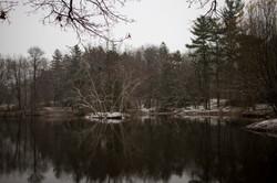 Snowy Elizabeth Park_053
