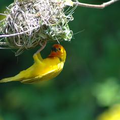 Nesting 2