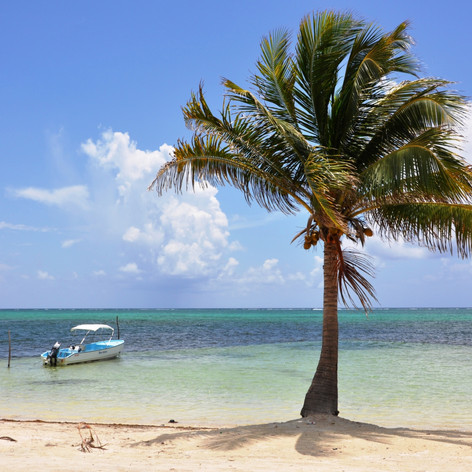 Palm and boat, Ambergris Caye