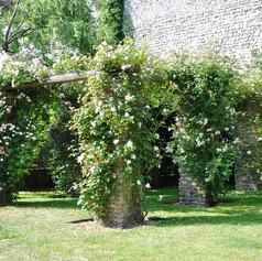 Rose trellis opposite the house Jane Austin lived in