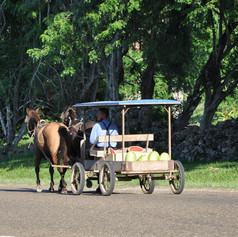 Mennonite cart with watermelons