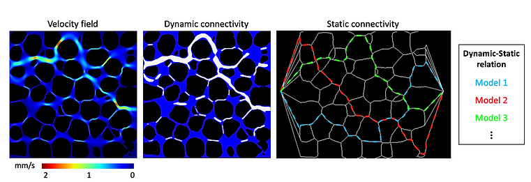 Dynamic-Static Connectivity.png