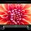 Thumbnail: Arçelik A43 A 860 B 4K UHD TV