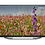 Thumbnail: Grundig BELGRAD 55 GFU 7905 B Android TV