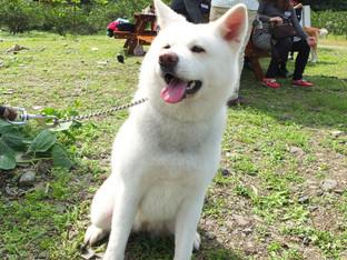 2015初春賞櫻野餐活動