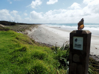 Good times, confusing times and enlightening times - Auckland to Whangarei (feat. Vipassana)