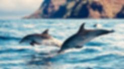 doplphins-wild-swimming_1.jpg