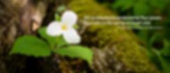 Spring20_trillium-poem.jpg