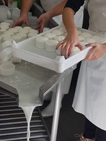 Visit to the Fresh Cheese Factory