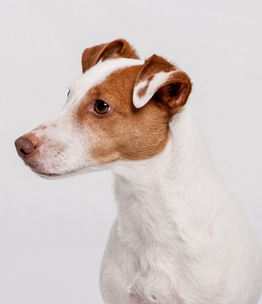 Dog training in Calabasas and Northridge
