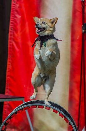 Trick Dog Test Online