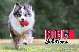 How to use a KONG