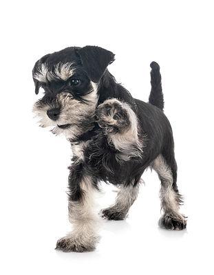 Online Puppy Class