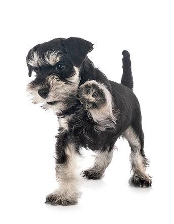 Puppy Start Right Online Class