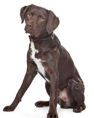 Dog Obedience Encino Tarzana