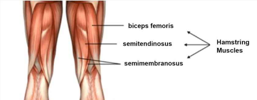 how to stretch the hamstring muscles to improve back pain
