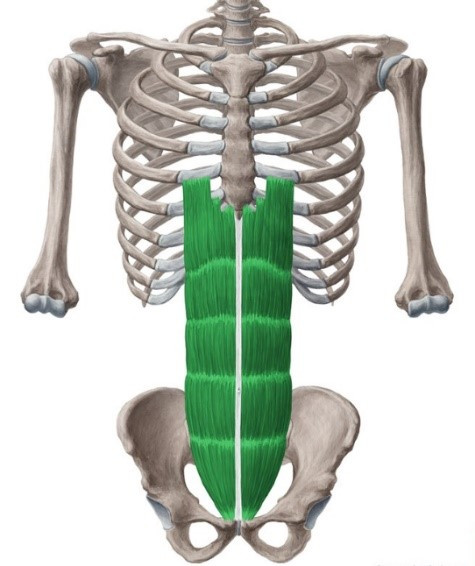 exercises to strengthen rectus abdominals