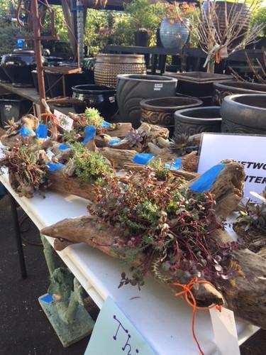 sedem driftwood planters 2018.jpg