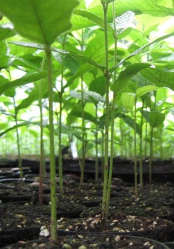 Nativ Nurseries Seedlings