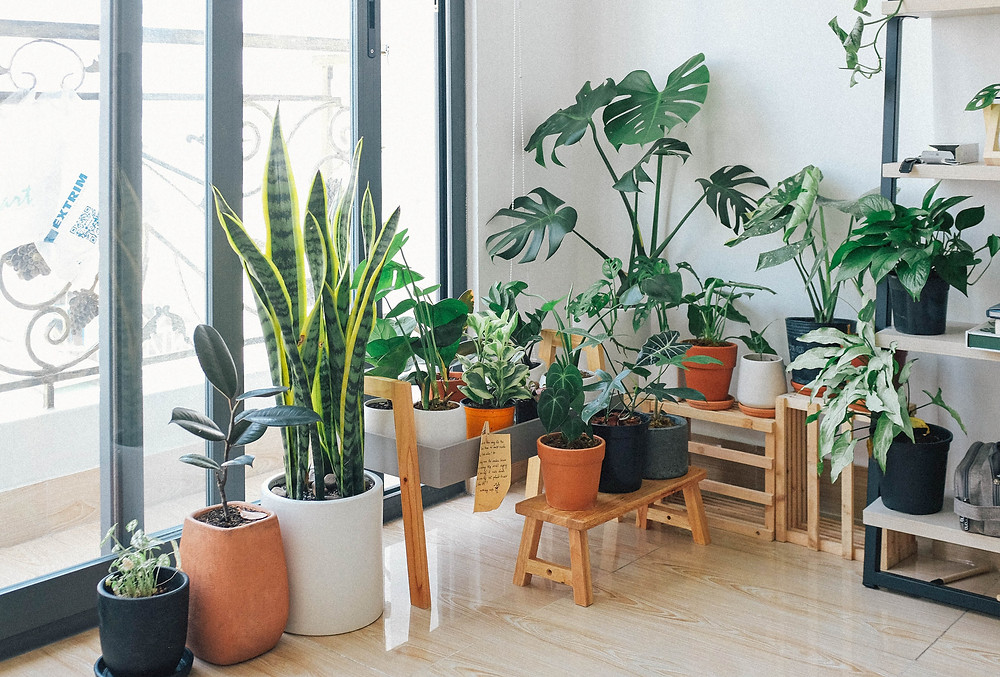 Farnan Real Estate - Blog - Decorating with Plants