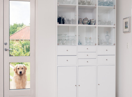 Doggie Door Safety: What to Know
