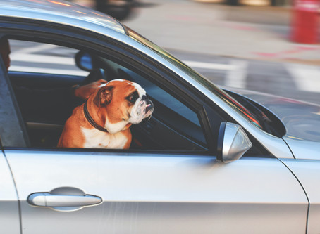 Three Tips for Prepping Your Pets for the Big Move