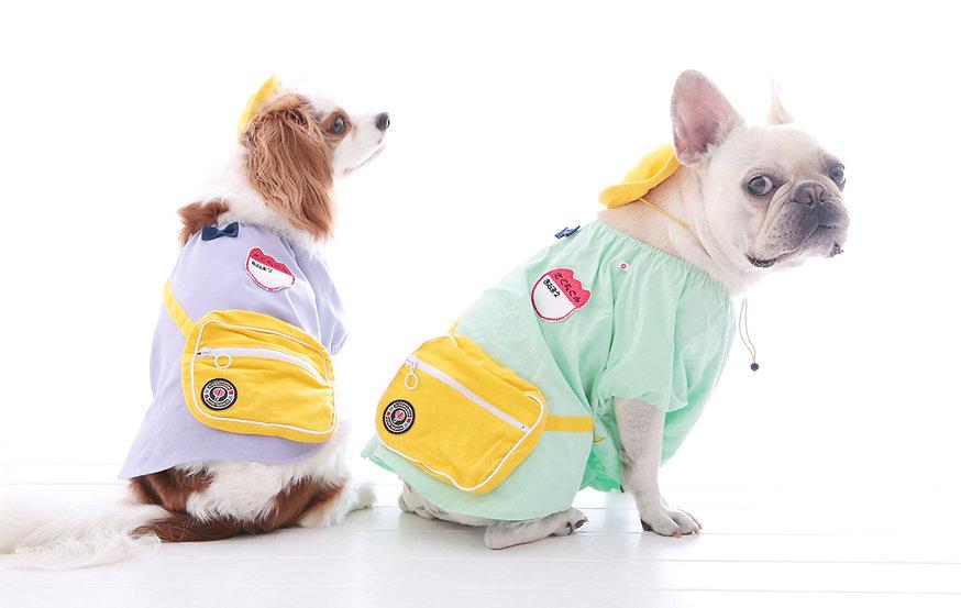 ペット撮影,大阪