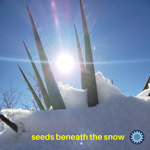 Seeds Beneath the Snow.png