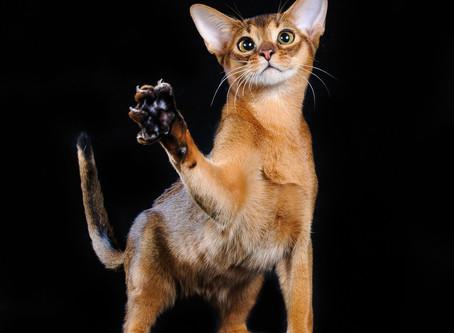 Кошачья шерсть: проблемы и уход