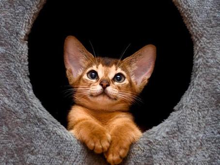 Девять признаков хорошего питомника кошек