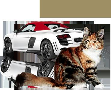 R8Spyder.png