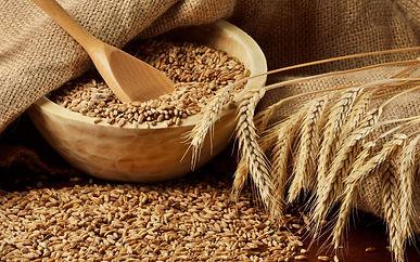 пшеница.jpeg