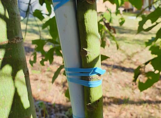 Plant Tying Band