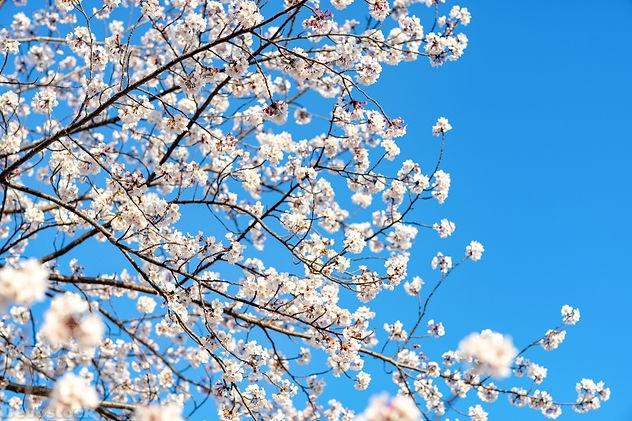 stock-photo-devostock-nature-blue-sky-bl