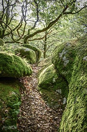 Forêt Uchon.jpg