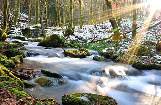 15- Ruisseau de la Proie à Arleuf
