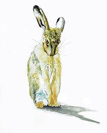 Beverley Hare 2.jpg