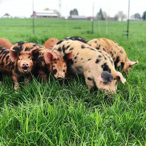 Pastured Pork Share (Deposit) | $4.50/lb
