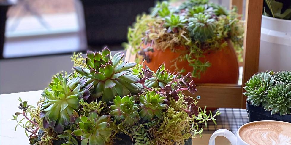 """Harvest Succulent"" Workshop & Coffee | w/ Bekki from Blossoms & Brambles"