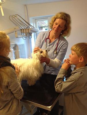 Tandrens, ultralyd, kastration, sterilisation, vaccination