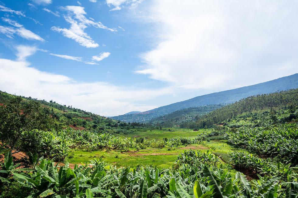 Kigali-Green_sawa-6.jpg