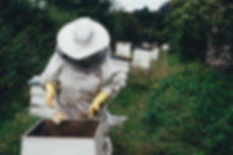 Beekeeper Collecting Bee Pollen
