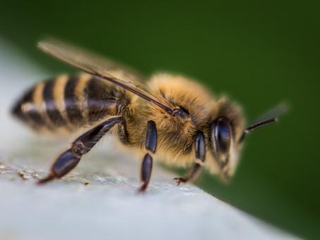 Dances with Honeybees
