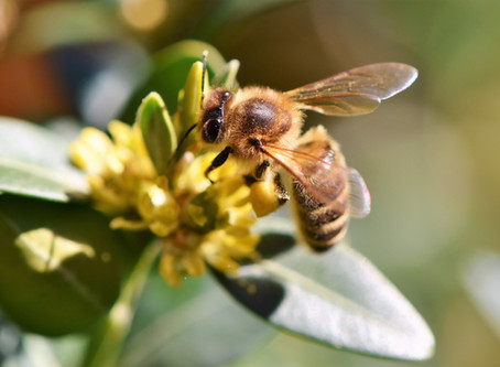 Beekeepers: The Best time to start feeding your beehives is now!