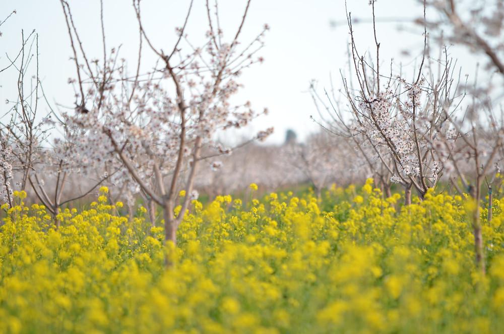 Fresh Bee Pollen Field