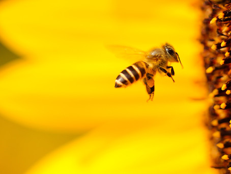 Recommended Use for Fluffy Fresh Bee Pollen